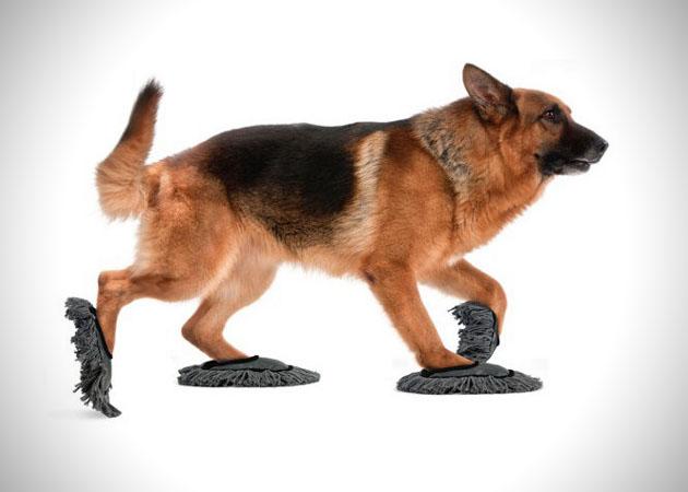 Hondendweil