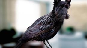 Nieuwe vogelsoort ontdekt: Dords!